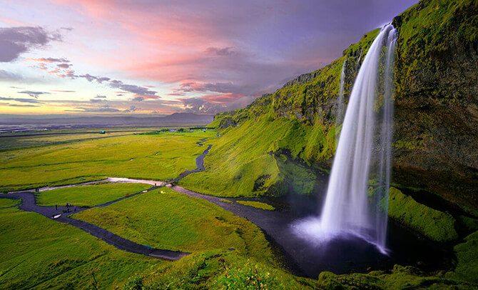 Heilpflanze Isländisch Moos