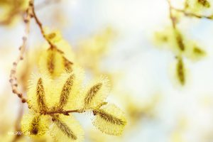 Pollenallergie und Klimawandel